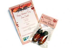 2-cocoa-roaches
